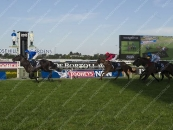 3rd In The Group 1 Golden Rose At Rosehill