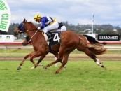 Win in the 2yo QTIS Maiden @ Ipswich at 2nd career start