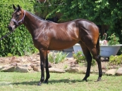 as a yearling