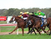 Wins Well At Ipswich 5 Starts Ago Number 3 Maroon and Gold Colours