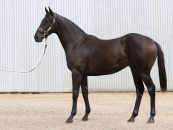 yearling pic COST 62000