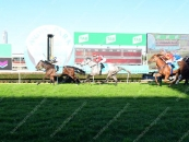 Iron Craft Places A Mighty Close Up 3rd At The Gold Coast 3 Starts Ago