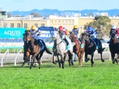 3rd At The Gold Coast 3 Starts Ago Outside Grey Horse