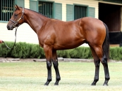 Photo Taken As A Yearling Sold for 250k