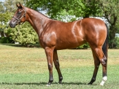yearling pic UPDATED ONES TO FOLLOW