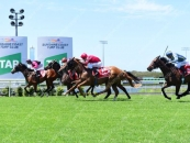3rd At The Sunshine Coast Over 1300m Outside Horse in The Photo Cerise & Black Stripes