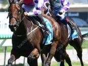 Places 1 x 2nd & 2 x 3rds at the Gold Coast & Beaudesert in his past 3 starts
