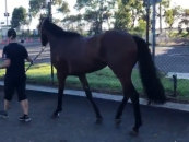 All Photos Taken off A Small Video of The Horse Parading At Roseill 7th of February 2021