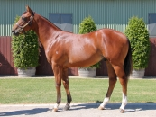 Yearling pic