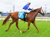 Easy Gold Coast Winner Over 1400m 2 Starts Ago When Led All The Way!!!