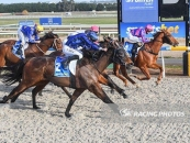 Coronel Places 3rd at Ballarat Synthetic 2 Starts Ago Over 1100m Far Outside Blue & Black Stripes