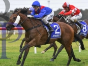 Agent of Chaos Easily Wins At Kembla Grange 35k Race Over 1300m